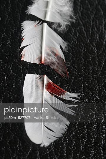 Zerschnittende weiße Feder    - p450m1527707 von Hanka Steidle