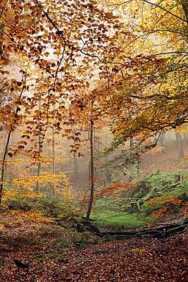 Herbst - p1013m716428 von G. Bursac