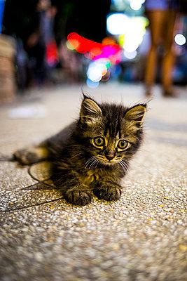Cat lying on street - p680m1511531 by Stella Mai