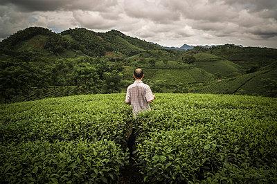 Tea Plantations near Doan Hung in Yen Bai Province, Vietnam - p934m1022147 by Sebastien Loffler