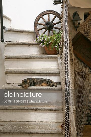 Katze auf Treppe - p375m1564623 von whatapicture