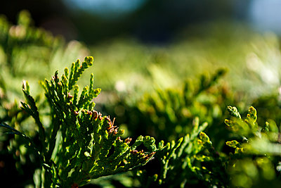 Green plant on a Dim background - p1166m2072001 by Cavan Images