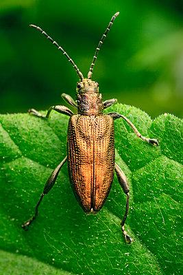 leaf beetle - p1501m2199802 by Alexander Sommer