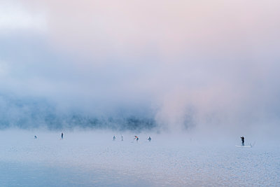 Group of people stand up paddle surfing on a lake in the fog - p300m2169986 by Daniel González