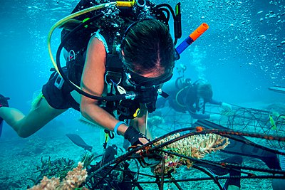 Underwater view of diver fixing a seacrete, (artificial steel reef with electric current), Lombok, Indonesia - p429m1062117f by Steve Woods Photography