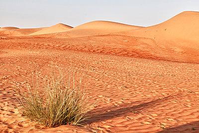 Desert - p631m913056 by Franck Beloncle