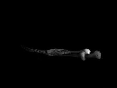 still life - p1413m1511449 by Pupa Neumann