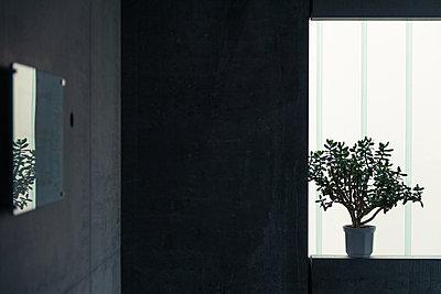 Grünpflanze auf der Fensterbank - p354m1133791 von Andreas Süss