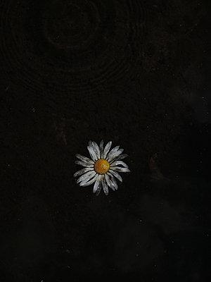 Flower swimming - p444m1041343 by Müggenburg