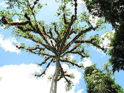 Ceiba - p5080183 by Olivia Barr