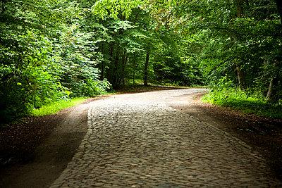 Empty road in forest - p528m672626 by Kari Kohvakka