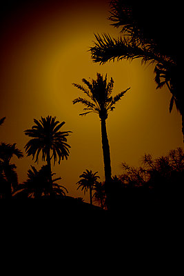 Palm trees, Marrakesh, Morocco - p1028m1586816 by Jean Marmeisse