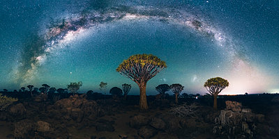Quiver tree forest (Aloe dichotoma), Keetmanshoop, Namibia, Africa. Trees at night under the stars of the southern hemisphere. - p651m2033347 by Marco Bottigelli