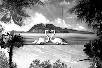 Flamingo scenery - p1484m2150256 by Céline Nieszawer