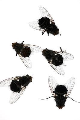 Tote Fliegen - p4010606 von Frank Baquet
