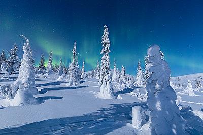 Northern Lights (Aurora Borealis) above the snowy woods, Pallas-Yllastunturi National Park, Muonio, Lapland, Finland - p871m2019775 by Roberto Moiola