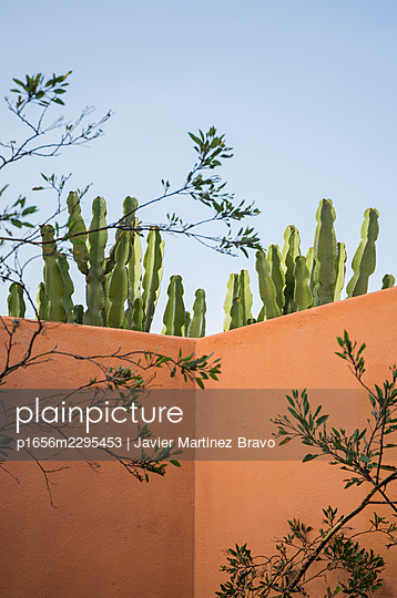 Cactus garden - p1656m2295453 by Javier Martinez Bravo