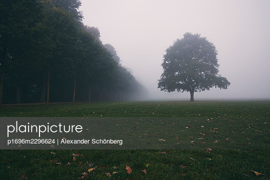 Tree in the meadow in the fog, City Park, Hamburg - p1696m2296624 by Alexander Schönberg
