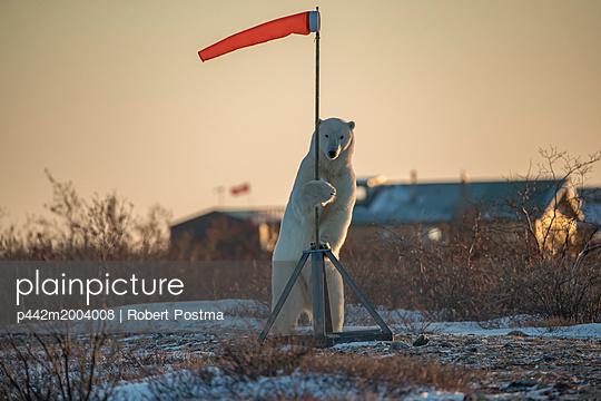 p442m2004008 von Robert Postma