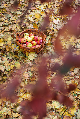 Wicker basket - p335m1087344 by Andreas Körner