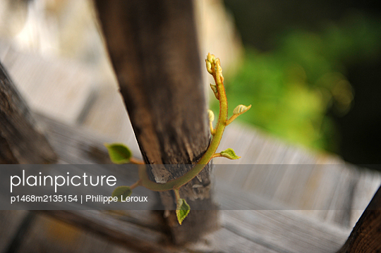 p1468m2135154 by Philippe Leroux