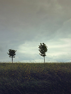 Two sapling trees on grassy horizon behind stormy sky - p1072m829473 by Neville Mountford-Hoare