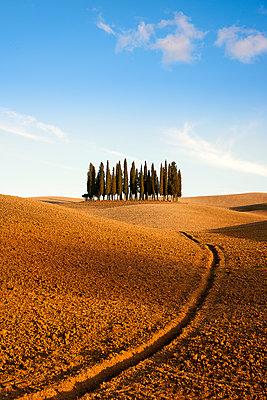 Landschaft - p1205m1106468 von Toni Anzenberger