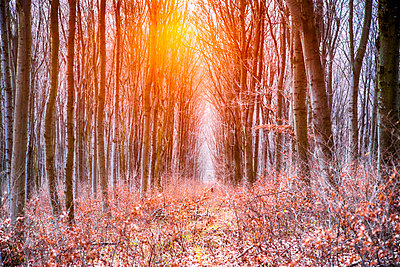 Wald - p1205m1515936 von Toni Anzenberger