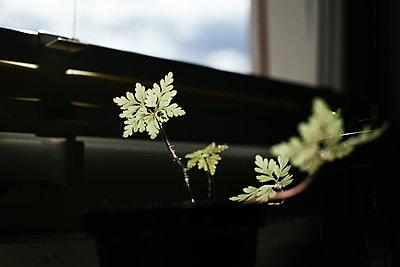 Pflanze im Gegenlicht - p1357m1488498 von Amadeus Waldner