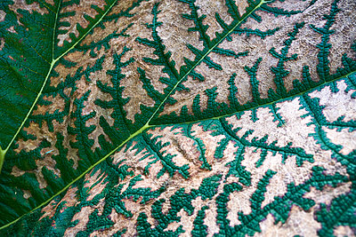 Close-up of leaf - p851m1214786 by Lohfink