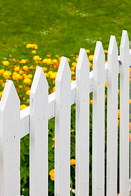 Flowerbed - p248m817735 by BY