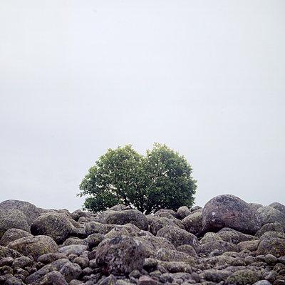 Tree on the rocky surroundigs - p1269m1113120 by Sari Poijärvi