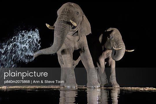 p840m2075868 von Ann & Steve Toon
