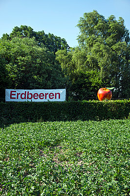 Information sign strawberry field - p229m1042863 by Martin Langer