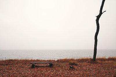 Eine Bank und ein toter Baum an der Küste, Ostsee - p1696m2296517 von Alexander Schönberg