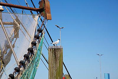 Möwe auf Poller am Hafen - p606m1573169 von Iris Friedrich