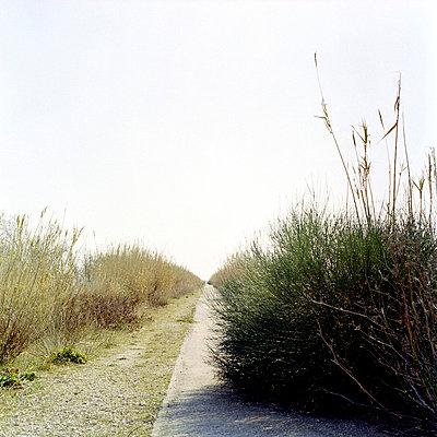 Straight path - p7780030 by Denis Dalmasso