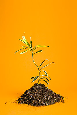 Plant against yellow background - p1094m1015446 by Patrick Strattner