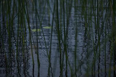 A lake, Sweden - p348m733657 by Martina Sjaunja