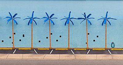 Plastic Palm Trees - p1082m1528474 by Daniel Allan