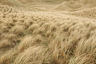 Grass at Balnakeil Beach - p1477m2038943 by rainandsalt