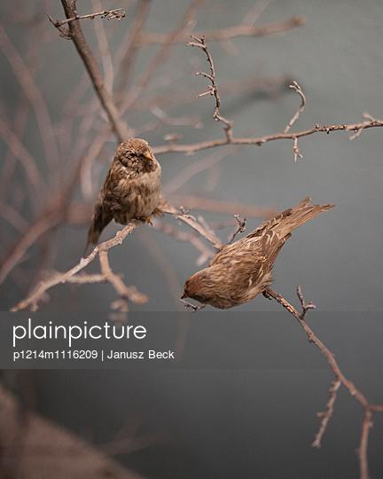 Vögel auf Ast - p1214m1116209 von Janusz Beck