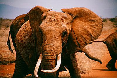 Tsavo East National Park - p1002m833705 by christian plochacki