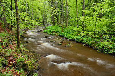 Germany, Saxony-Anhalt, Schierke, Harz, Bode river in the Elendstal valley - p300m2081183 by Martin Rügner