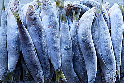Frozen fish - p851m1528964 by Lohfink