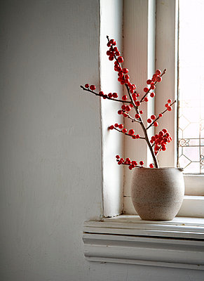 Red berries in vase on windowsill of Isle of Wight home;  UK - p349m920063 by Rachel Whiting