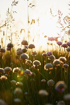 Wildblumen - p464m1040755 von Elektrons 08