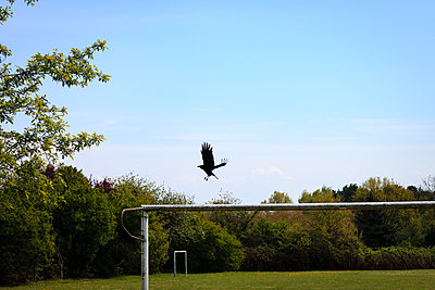 Football pitch - p417m1190201 by Pat Meise