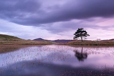 Kelly Hall Tarn at twilight, Lake District, Cumbria, England, United Kingdom, Europe - p871m993830 by Adam Burton