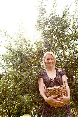 Harvesting apples - p981m881585 by Franke + Mans